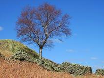 De muur van de boom en van de droge steen Royalty-vrije Stock Fotografie