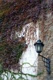 De muur van de klimop Royalty-vrije Stock Foto