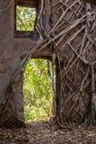 De muur van een oude vesting met bomen die door het ontspruiten Stock Foto's