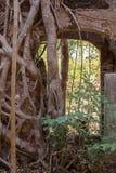 De muur van een oude vesting met een boog en ontspruitende bomen Royalty-vrije Stock Fotografie