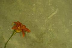De muur van Grunge met bloem Stock Afbeeldingen