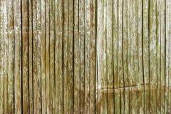De muur van het bamboe Stock Fotografie