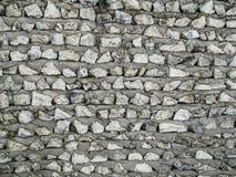 De Muur van het koraal Stock Afbeeldingen