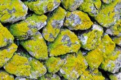De muur van het mos stock foto's