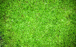 De muur van het mos Stock Fotografie
