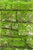 De muur van het mos Royalty-vrije Stock Foto's