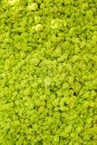 De muur van het rendiermos, groene muurdecoratie die uit rangiferina van Cladonia van het rendierkorstmos wordt samengesteld, bru stock foto