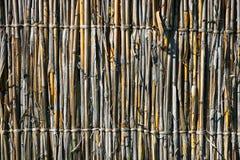 De muur van het riet Stock Foto's