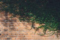 De muur wordt gemaakt van baksteen en in wit dan geschilderd Er zijn klimplanten op de linkermuur Deze muur is populair in Engels stock foto's