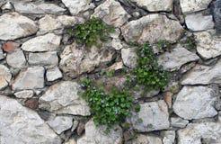 De muurachtergrond van de steen met gras stock foto