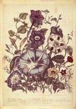 De Muurkunst van de bloemen Botanische Uitstekende Stijl met Geweven Achtergrond Royalty-vrije Stock Foto
