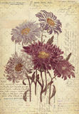 De Muurkunst van de bloemen Botanische Uitstekende Stijl met Geweven Achtergrond Royalty-vrije Stock Foto's