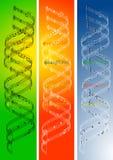 De Muziek van DNA Stock Fotografie
