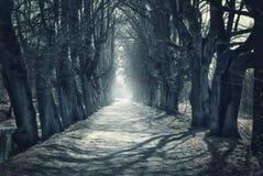 De mystieke achtergrond van Halloween met donker bos Royalty-vrije Stock Fotografie