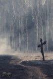 De mystieke achtergrond van Halloween met donker bos Stock Afbeelding