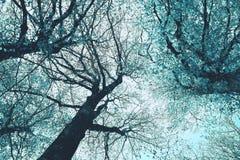 De mystieke silhouetten van bomenbrunches op kleurrijke hemelbackgrou Stock Foto