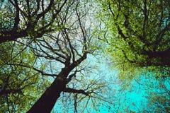 De mystieke silhouetten van bomenbrunches op kleurrijke hemelbackgrou Royalty-vrije Stock Fotografie