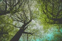 De mystieke silhouetten van bomenbrunches op kleurrijke hemelbackgrou Royalty-vrije Stock Foto