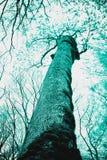 De mystieke silhouetten van bomenbrunches op kleurrijke hemelbackgrou Stock Afbeeldingen