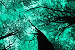 De mystieke silhouetten van bomenbrunches op kleurrijke hemelbackgrou Stock Afbeelding