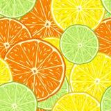 De Naadloze Achtergrond van de citrusvrucht Stock Afbeeldingen