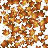 De naadloze achtergrond van de herfst. Vector illustratie. Stock Afbeeldingen