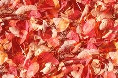De naadloze achtergrond van de herfstbladeren stock afbeelding