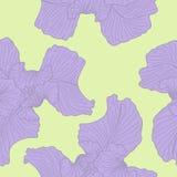 De naadloze achtergrond van de iris. Royalty-vrije Stock Foto's