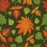 De naadloze achtergrond van grungebladeren. Dankzegging Royalty-vrije Stock Afbeelding