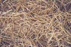 De naadloze achtergrond van het hooi Geel droog de herfstgras ter plaatse De textuur van hooi stock afbeelding
