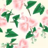 De naadloze bloemen van de de glorie roze lente van de textuurochtend die op een witte uitstekende vector editable illustratie wo vector illustratie