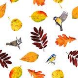 De naadloze bloemenbladeren en de vogels van de patroonherfst Royalty-vrije Stock Foto's
