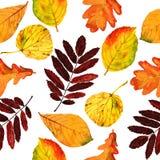 De naadloze bloemenbladeren van de patroonherfst Stock Afbeelding