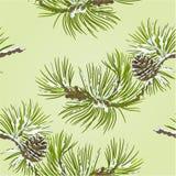 De naadloze tak van de textuurpijnboom met denneappelvector Stock Foto's