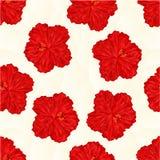 De naadloze vector van de bloemveelhoeken van de textuur rode hibiscus Stock Fotografie