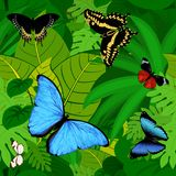 De naadloze vector Zuidamerikaanse tropische achtergrond van de regenwoudwildernis met vlinders Stock Afbeelding