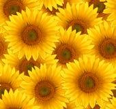 De naadloze zonnebloem van de patroonbloem Royalty-vrije Stock Afbeeldingen