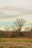De naakte bomen in het moeraslandlandschap van ` Gentbrugse meersen `-natuurreservaat stock afbeeldingen