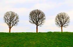 De naakte boom Stock Afbeelding
