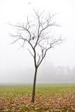 De naakte boom met gevallen bladeren op een mistige dag, Dulwich-Park, Engeland Stock Foto
