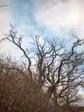 De naakte herfst vertakt zich geen de dalingsaard van de bladerenherfst Royalty-vrije Stock Fotografie