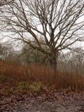 de naakte humeurige dag van de het gras donkere donkere herfst van de takboom Royalty-vrije Stock Afbeeldingen