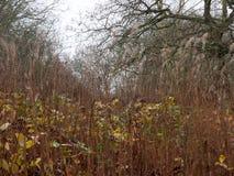 de naakte humeurige dag van de het gras donkere donkere herfst van de takboom Stock Afbeeldingen