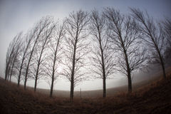 De naakte Mist van de Winter van Bomen Royalty-vrije Stock Foto's