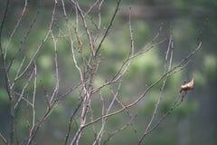 de naakte takken van de berkboom in de herfst tegen donkere achtergrond - vi Stock Afbeeldingen