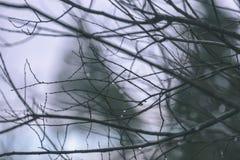 de naakte takken van de berkboom in de herfst tegen donkere achtergrond - vi Stock Afbeelding