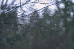 de naakte takken van de berkboom in de herfst tegen donkere achtergrond - vi Royalty-vrije Stock Afbeeldingen