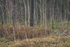 de naakte takken van de berkboom in de herfst tegen donkere achtergrond - vi Stock Foto