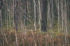 de naakte takken van de berkboom in de herfst tegen donkere achtergrond - vi Stock Foto's