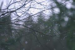 de naakte takken van de berkboom in de herfst tegen donkere achtergrond - vi Royalty-vrije Stock Afbeelding